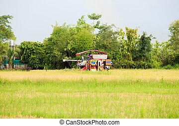 rice harvester working on the field