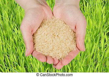 Rice in woman's hands