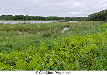 Rice Lake and Marshes at Breezy Point