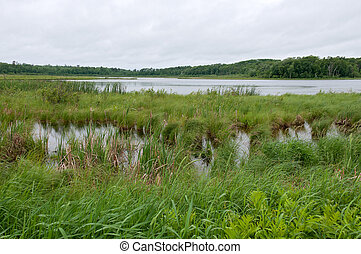 Rice Lake Marshes and Woods at Breezy Point