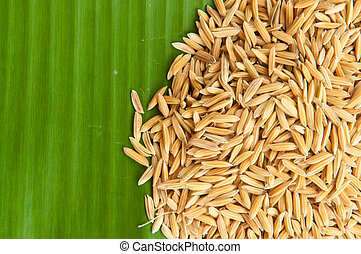 Rice on green leaf background