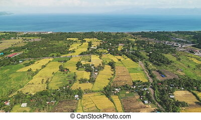 Rice paddy fields at tropic village on sea shore aerial. Green grass teracce at farms land. Nobody nature landscape at spring. Houses and cottages at farmlands. Birds-eye view of Legazpi, Philippines