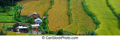 Rice paddy - Panorama of beautiful terraced rice field on ...