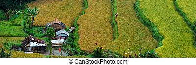 Rice paddy - Panorama of beautiful terraced rice field on ...