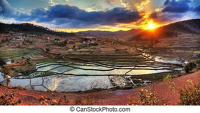Rice paddy sunset panorama