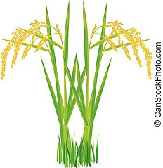 rice plant on white background vector design