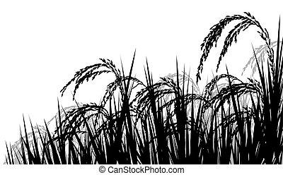 Rice ripe for harvest - Vector silhouette illustration of ...