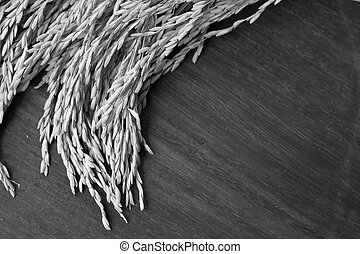 Rice seed on wooden background.