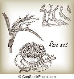 Rice set. Spikelet of rice, rice porridge, rice field, hand...