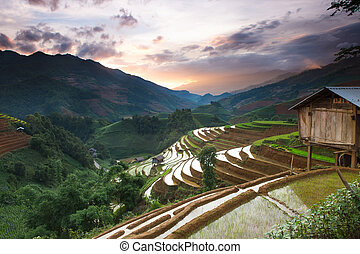 rice - Rice field terraces view on the top mountain Mu Cang...