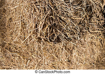 Rice straws after harvesting