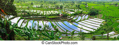 Landscape of beautiful rice terraced field full of water at Central Bali Indonesia