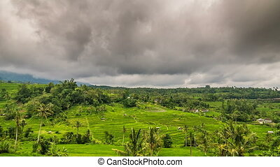 Rice terrace time lapse