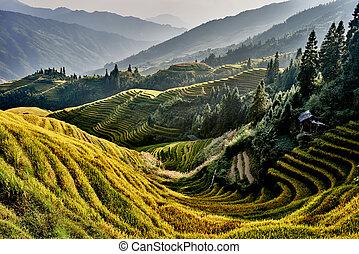 rice terraced fields Wengjia longji Longsheng Hunan China -...