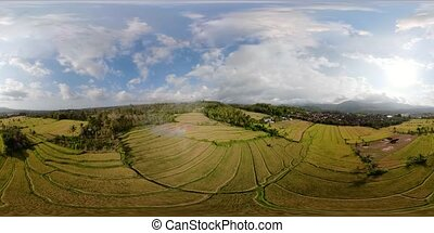 Rice terraces and agricultural land in indonesia vr360 -...