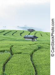 Rice Terraces at Ban Papongpieng, Chiangmai Thailand