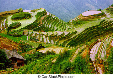 Hills transformed into rice terraces in the morning light