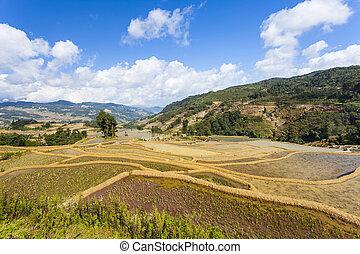 Rice terraces in Yuanyang, China