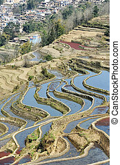 rice terraces of yuanyang in yunnan, china