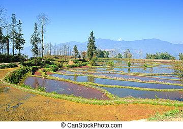 rice terraces of yuanyang in yunnan