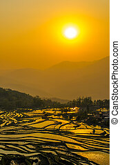 Rice terraces of Yuanyang, Yunnan, China