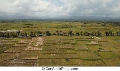 Rice terraces on Bali. - Aerial view: rice...