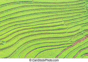 rice terraces - Rice Terraces in Northern of Vietnam