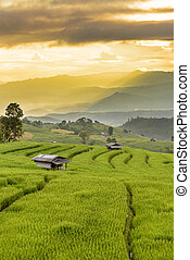 Rice Terraces with sunset scene at Ban Papongpieng, Chiangmai Thailand
