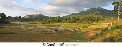 Ricefields from Londa to Kete Kesu - Rantepao - Sulawesi island - Indonesia - Panorama.