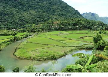 Ricefields in Vietnam - ricefields in vietnam