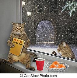 Rich cat and poor cat 2