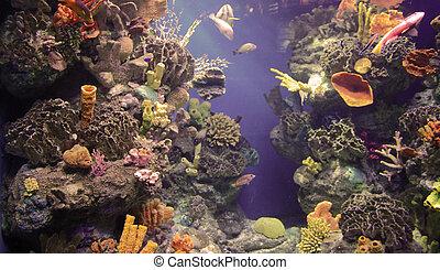rich, vibrant color into the marine aquarium