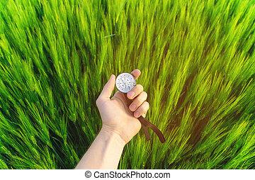 richting, tarwe, natuur, houden, man's, field., kompas, bevinding, hand