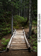 Rickety Wooden Bridge Over Ravine in Forest in Pacific ...