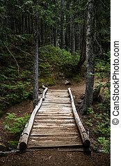 Rickety Wooden Bridge Over Ravine in Forest