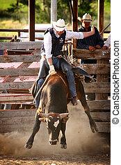 ridande, rodeo, cowboy, tjur