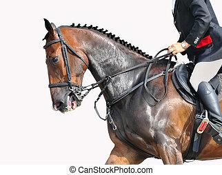 rider and horse - closeup