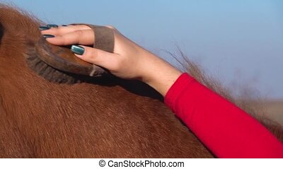 Rider caring for a horse. Slow motion. Close up - Rider...