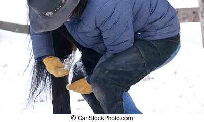 Rider cleaning the hoof of brown horse from the snow in the...