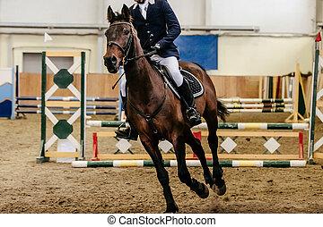 rider equestrian in horse