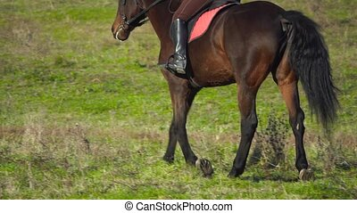 Rider galloping on a n field on horseback. Back view. Slow...