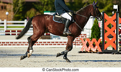 Rider on bay horse in competitions