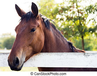 Rider on horse portrait
