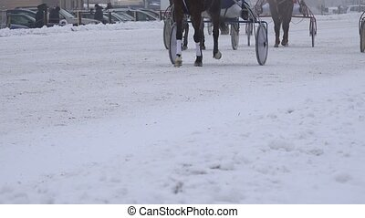 rider on horse race, trotting on hippodrome cold winter day....