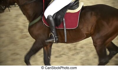 Rider performing galloping on bay horse, top view - wide...