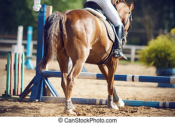 Rider with a horse are going to jump over the barrier, a view from the background.