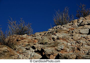 Ridgeline Cholla - Cholla plants stand in stark contract to...