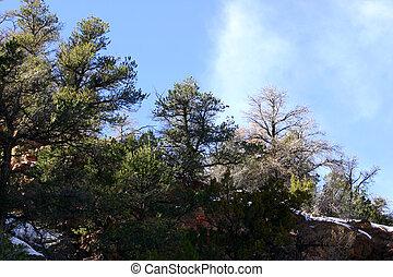 Ridgeline - Trees on ridge line in early spring
