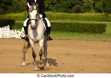 Riding horse - A picture of an equestrian on a white horse ...