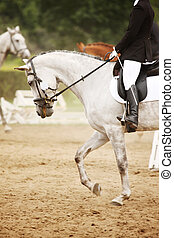 Riding horse - A picture of an equestrian on a white horse...